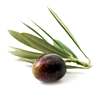 togora-oliv-lesbos