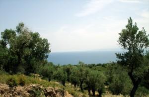 togora-olivlund-lesbos-grek